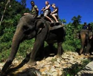 ecotourisme elephant asie