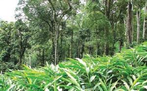 Kerala-Tourism La route des épices